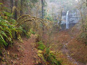 Pheasant Creek Falls