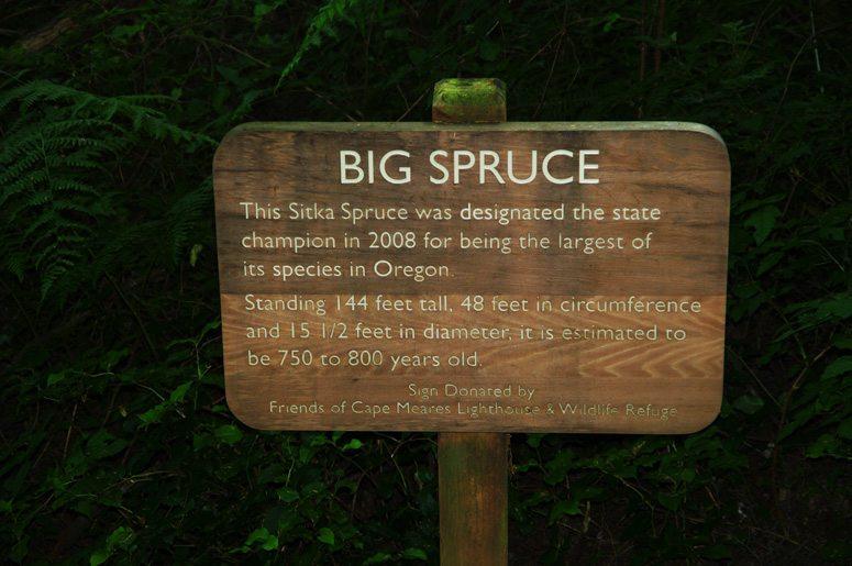 Big Sitka Spruce sign