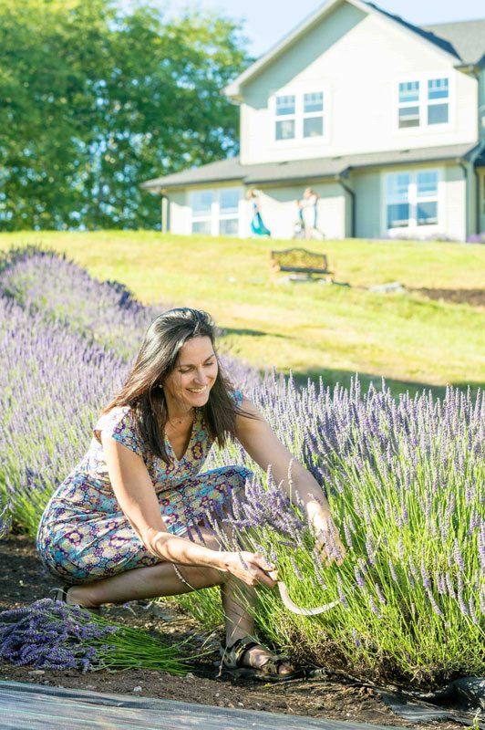 Heidi cutting lavender with a harvest sickle. Photo credit: Trav Williams, Broken Banjo Photography