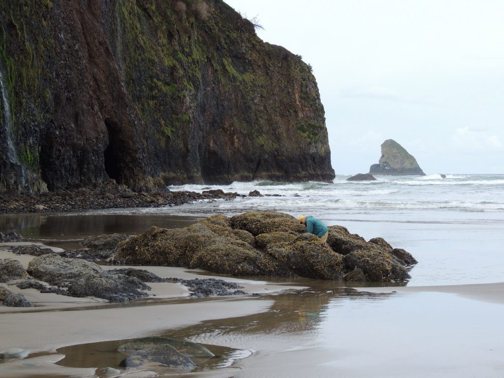 Low tide, tide pools