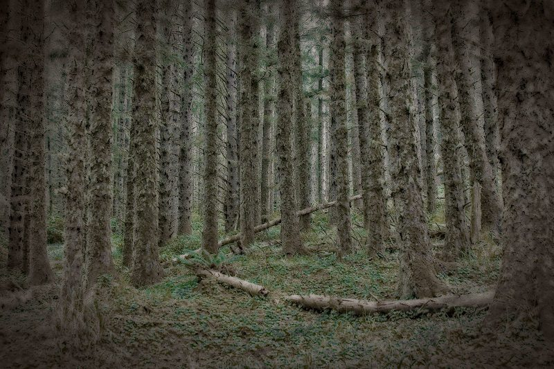 Forest undergrowth near Tillamook, Oregon.